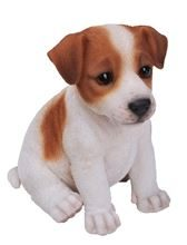 PP-JACK-F JACK RUSSELL PUPPY